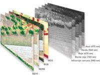 Resultados multiespectrales agricultura de precision