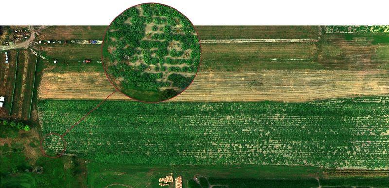 sensor agricultura MicaSense Altum GSD