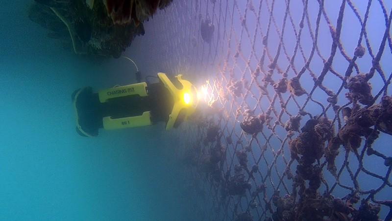 """Chasing M"""" inspeccionando redes de pesca."""