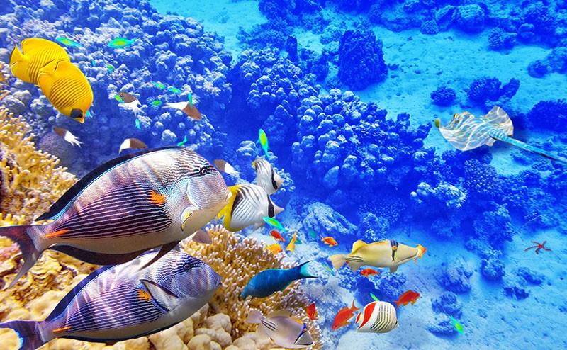 El Fifish V6 captura imágenes nítidas y con colores naturales.