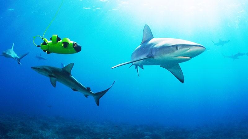 QYSEA dona el 1% de sus beneficios al proyecto Clean Ocean, destinado a proteger los mares.