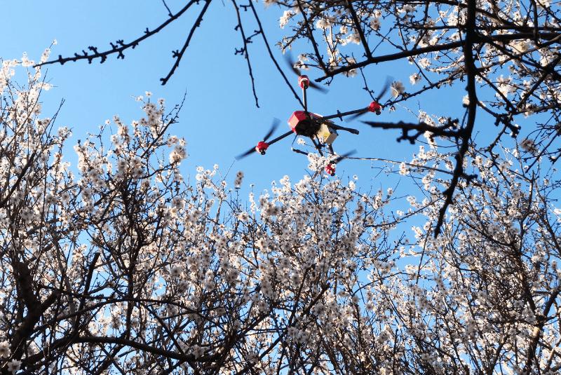 XAG P40 sobrevolando árboles frutales.