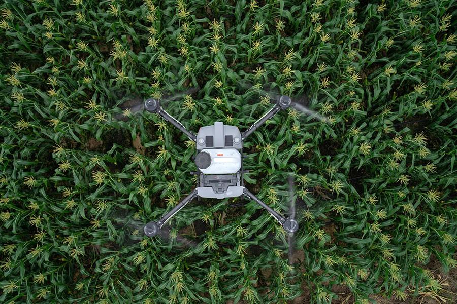 DJI Agras T10 volando sobre un campo de maiz