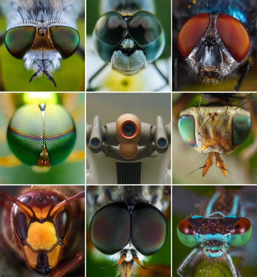 Parrot Anafi Ai sensores multi direccion que se inspiran en la naturaleza.